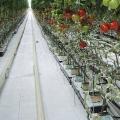 Agrofolija polipropilenska