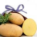 sjemenski krumpir JELLY
