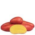 sjemenski krumpir RED FANTASY