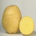 sjemenski krumpir COLETTE