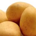 sjemenski krumpir CONCORDIA