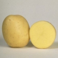 sjemenski krumpir ESPRIT
