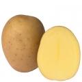 sjemenski krumpir EWELINA