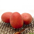 sjemenski krumpir RED SONIA