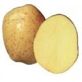 sjemenski krumpir VINETA