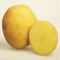 sjeme-krumpir-marabel