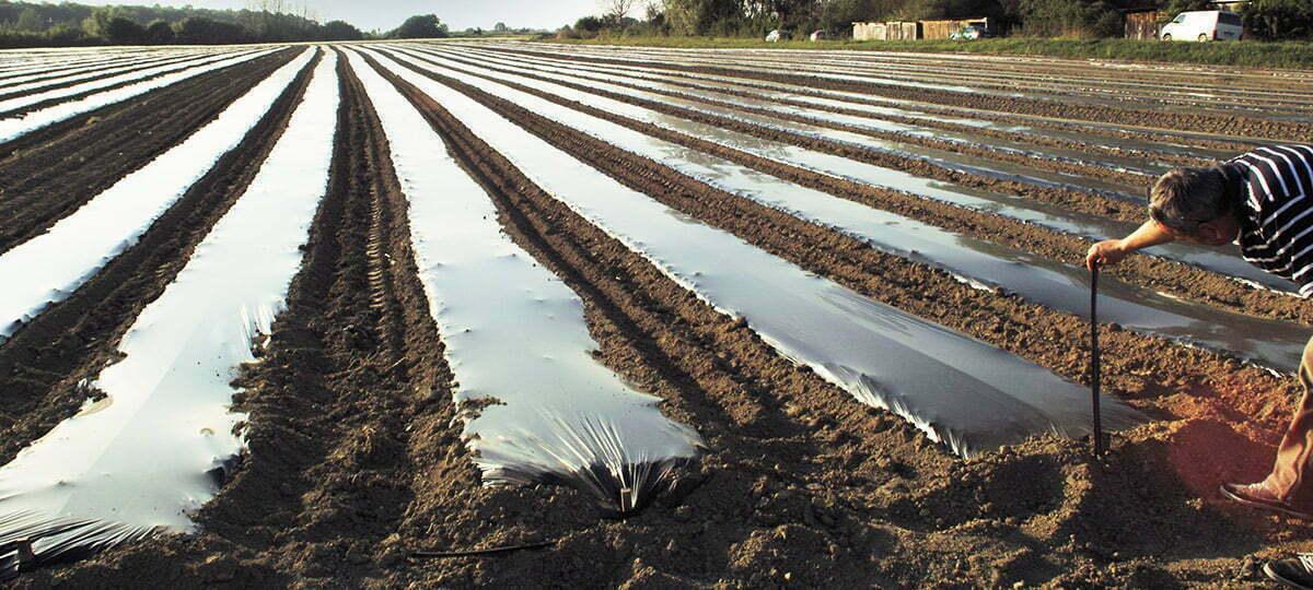 Folije za prekrivanje tla- mulchiranje 41